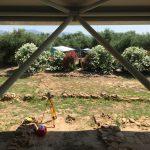Ausgrabungen um den Nestor Palast