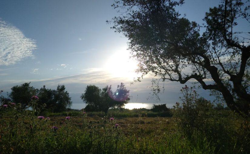 Sunrise, Olivetree and Sea